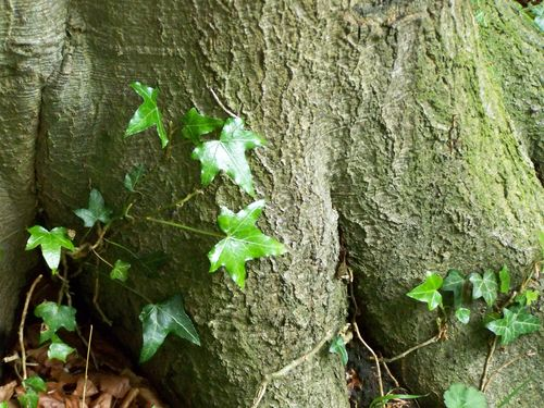Tree trunk and green foliage