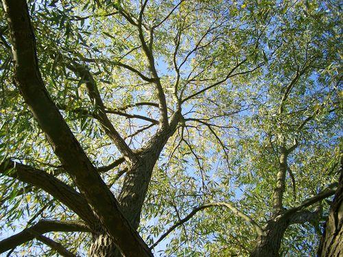 Blue sky and beautiful tree