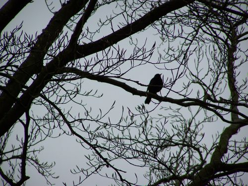 Bird sat in the branches of a tree silhouette