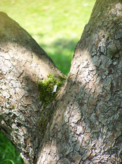 sunlight on tree bark trunk