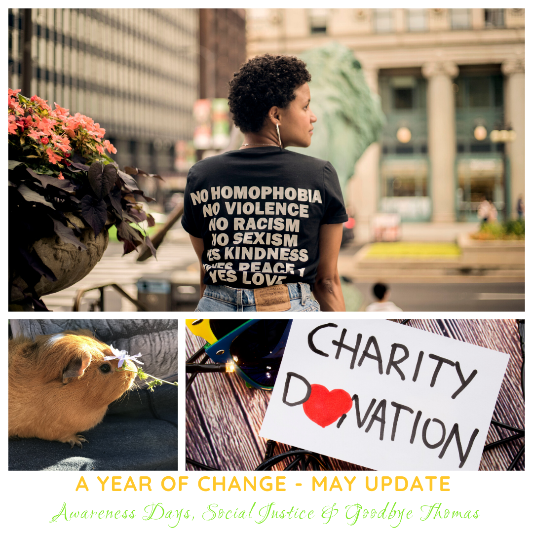 "collage for may updates including image of a black woman wearing a t-shirt saying ""no homophobia, no violence, no racism, no sexism"", an image of a ginger guinea pig, and an image with the words ""charity donation"" and the o is a red heart"